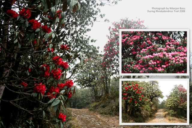 Rhododendron Trail to Barsey
